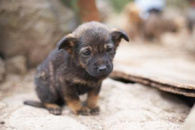 Dogs Health Home Remedies For Deworming Puppies