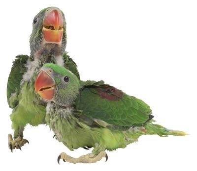How to Get Pet Birds to Calm Down