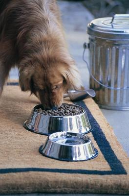 What Dog Food Fills Up a Dog With Less Food?