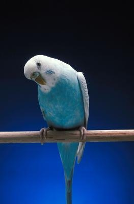 How to Make Your Own Bird Treat Stick