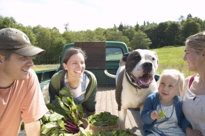 Fruits & Vegetables That Dogs Should Not Eat