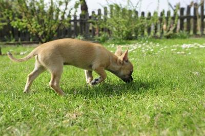 how to stop dog urinating in house