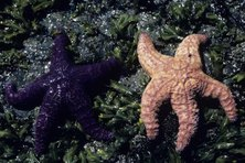 Starfish only live in saltwater.