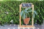 DIY Hanging Planter Sign