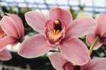 How to Save My Frozen Orchids