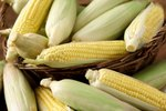 Is Corn a Type of Grass?
