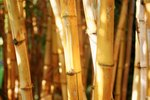 How to Build Huts With Bamboo
