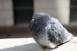 How to Get Rid of Pigeons at a Bird Feeder