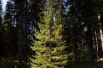 Differences Between Evergreen and Deciduous Forests