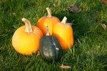 How to Store Pumpkin Puree