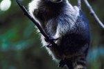 How to Keep Raccoons Away From My Deer Feeder
