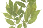 How to Glue Leaves