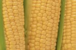 The Differences Between Maize & Corn
