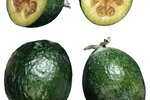 The Difference Between a Guayaba and a Guava