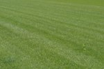 The Best Weed Control for Centipede Grass