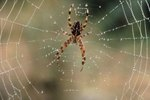 Household Things That Repel Spiders