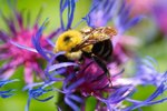 Are Carpenter Bees Active Year Round?