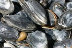 How to Prepare Clams for Chowder