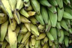Types of Plantain Bananas