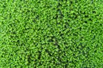 What to Put on a Lawn to Kill Moss