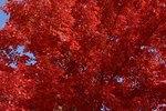 What Insecticide Kills Oak Borers?