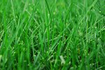 How to Use Miracle Grow on Newly Seeded Grass