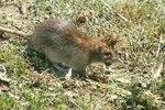 Fluoride in Rat Poison