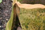 How to Grow Moss on Clay Pots