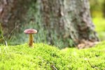 How to Kill Moss and Toadstools in Lawns