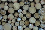 How to Preserve Pine Logs