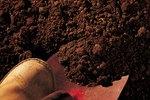 How to Transplant Nandina Domestica