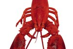 How to Remove the Grain Sack from a Lobster