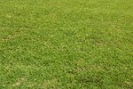 Does Copper Sulfate Harm Turf?