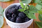 How to Juice Blackberries