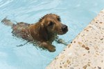 How Do I Get Dog Hair Out of My Pool?