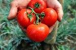 How to Preserve Fresh Tomato Salsa