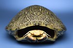 How to Polish a Turtle Shell