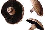 How to Cut Portobello Mushrooms