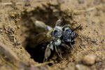 Insects Found in Sandy Landscapes