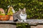 Do Moth Balls Keep Cats Away From Your Garden?