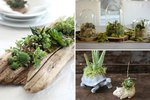 10 DIY Indoor Gardens for the Urban Gardener