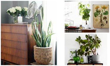 5 Houseplants That Are Easy to Keep Alive