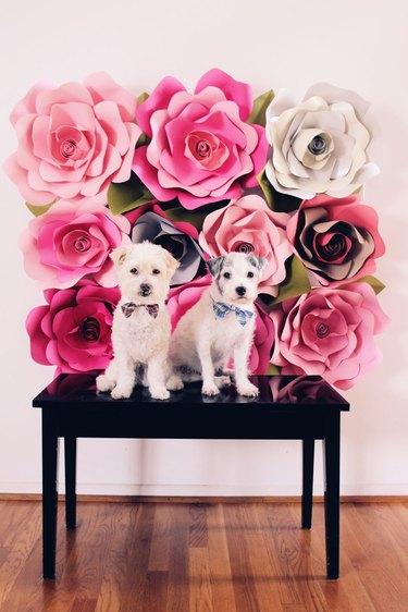 paper rose backdrop