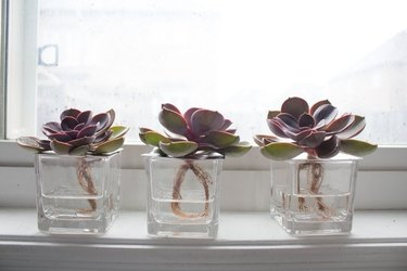hydroponic vases for succulents