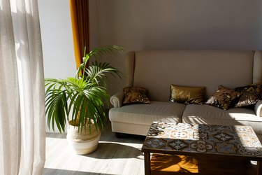 Modern stylish design of the apartment or room with a sofa, coffee table, curtains, tulle, against the beige wall. Hereinafter, a flower or a palm tree in a pot. Beautiful interior in vintage style.