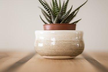 Small zebra haworthia succulent in clay pot