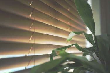 Closed mini-blind blocking sunshine,  house plant in foreground