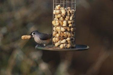 Tufted Titmouse at Peanut Bird Feeder