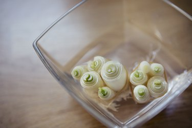 Leftover spring onion roots in a bowl of water starting to regrow green shoots