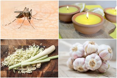 10 Natural Household Ingredients That Repel Mosquitos